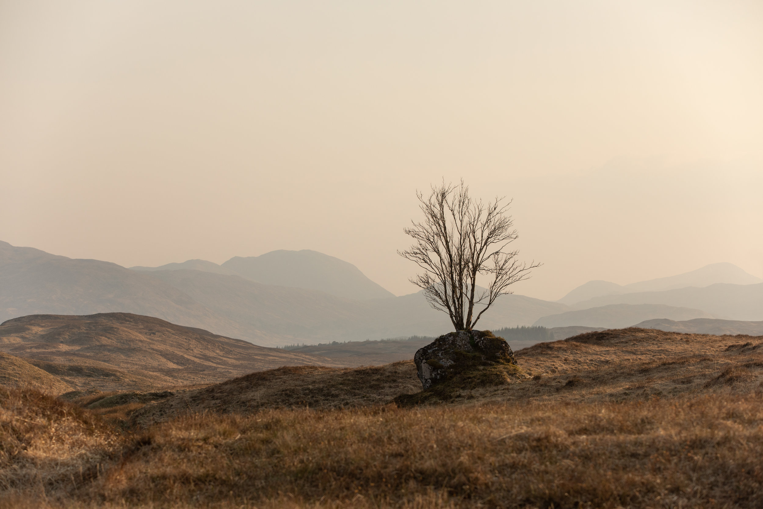 Highland-3.jpg