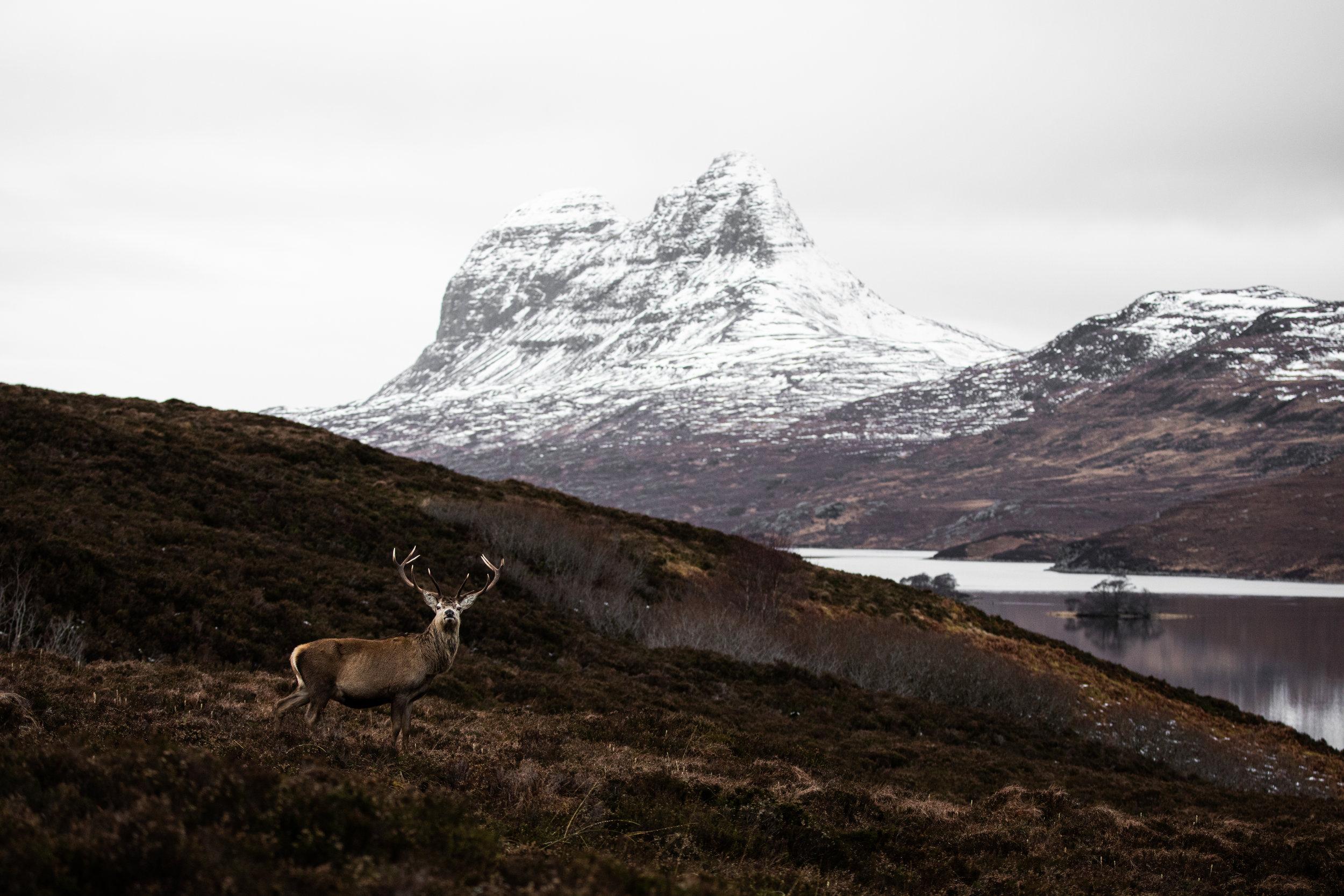 Highland-6.jpg