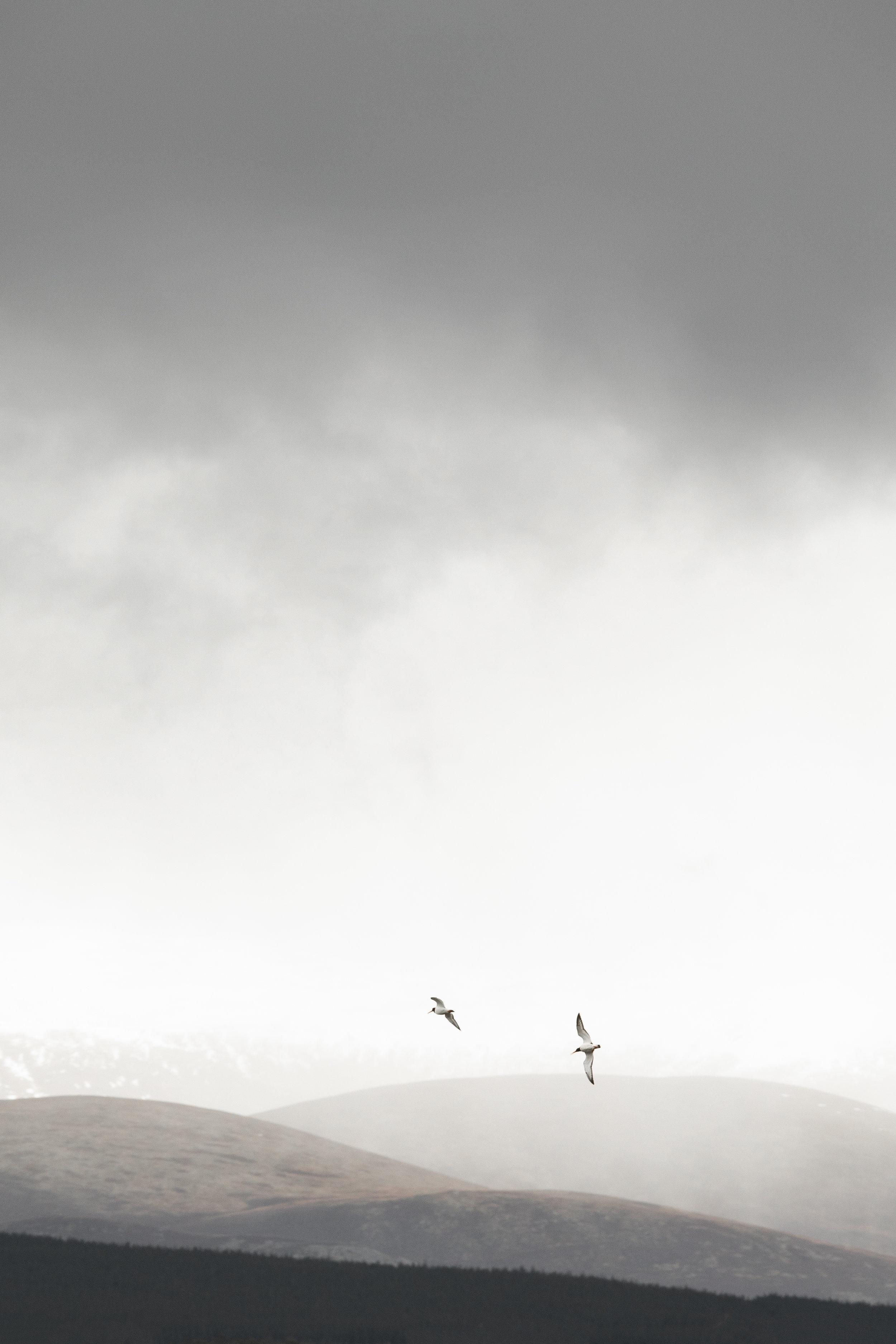Highland-18.jpg