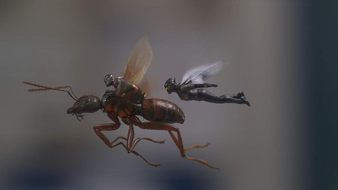 ant man wasp.PNG