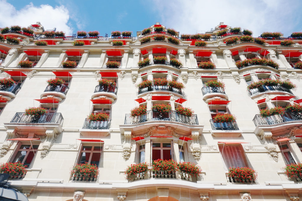 Everywhere you walk, there are beautiful Parisian buildings. Some with the most brightest citrus orange flowers, you've ever seen.