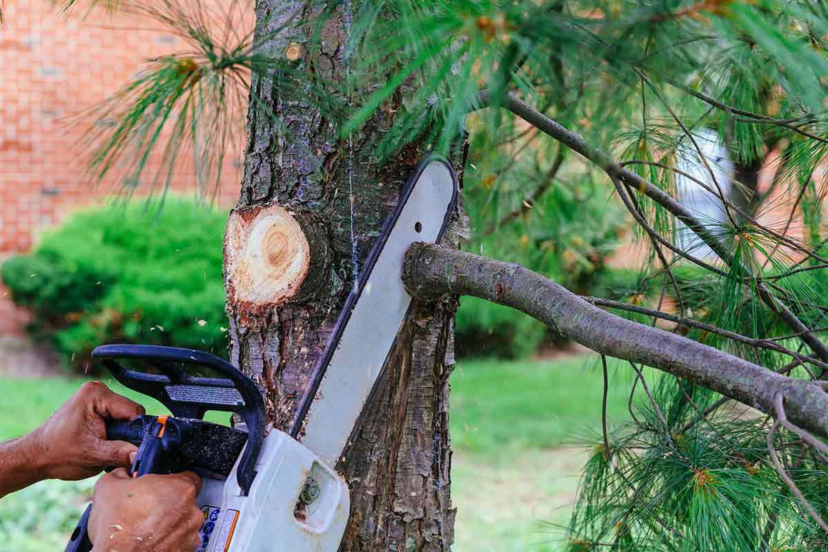 Tree Pruning & Trimming - Dead wood or weakened trees can fall to damage your house, crush vehicle, or even injure someone. Pruning your trees will promote health and vigor as well as increase the structural stability of a tree. Pruning trees improves air flow between the branches and allows for better sunlight penetration. A properly pruned shade tree dries quicker, which makes it much less susceptible to insect attacks and fungal diseases. Pruning also allows wind to pass through the tree and reduce the chances of damage during high winds.