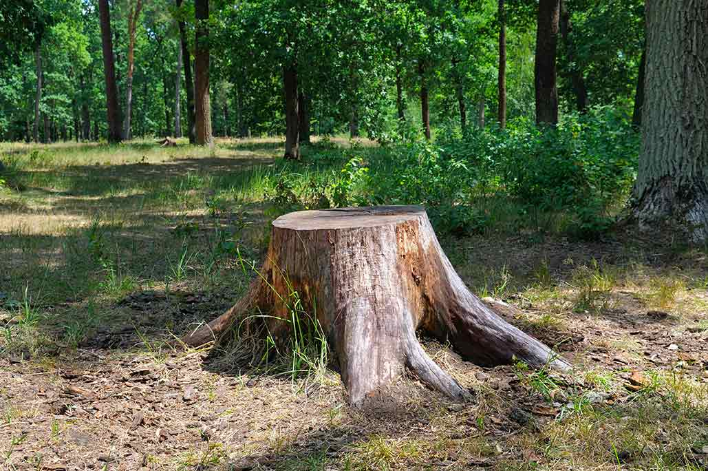 Stump Removal - We have our own stump grinder, which can be an additional service for a finishing touch. Once the stump has been ground, you won't be able to tell that a tree was ever there. You can plant grass, lay down a patio or add an addition to your home.