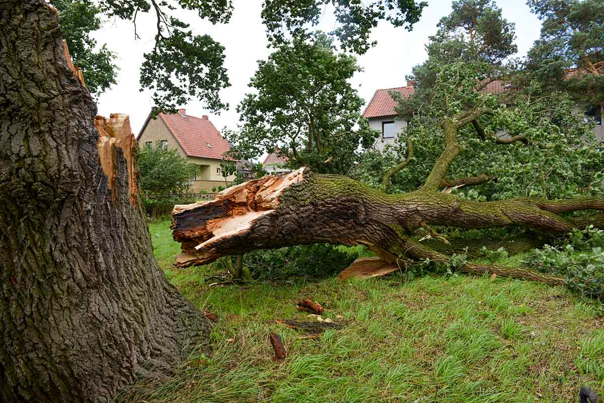 Insurance Quotesand Emergencies - If you sustain storm damage from your trees, our staff will remove the damaged trees, limbs and debris quickly. We can provide you with a quote for your insurance company to help expedite your claim.