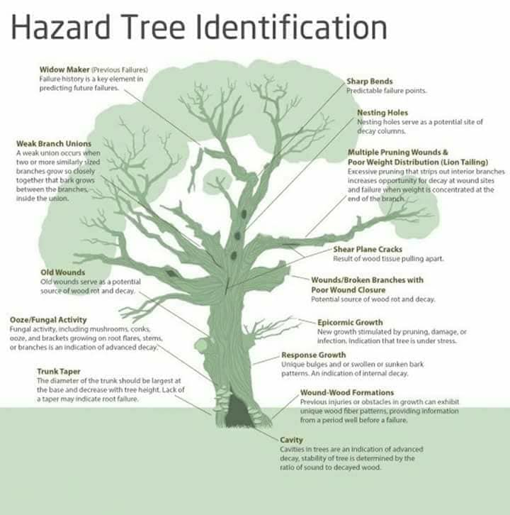 Tree health & hazard diagram.jpg