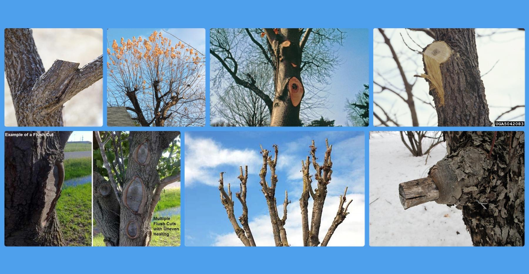 bad pruning collage.jpg