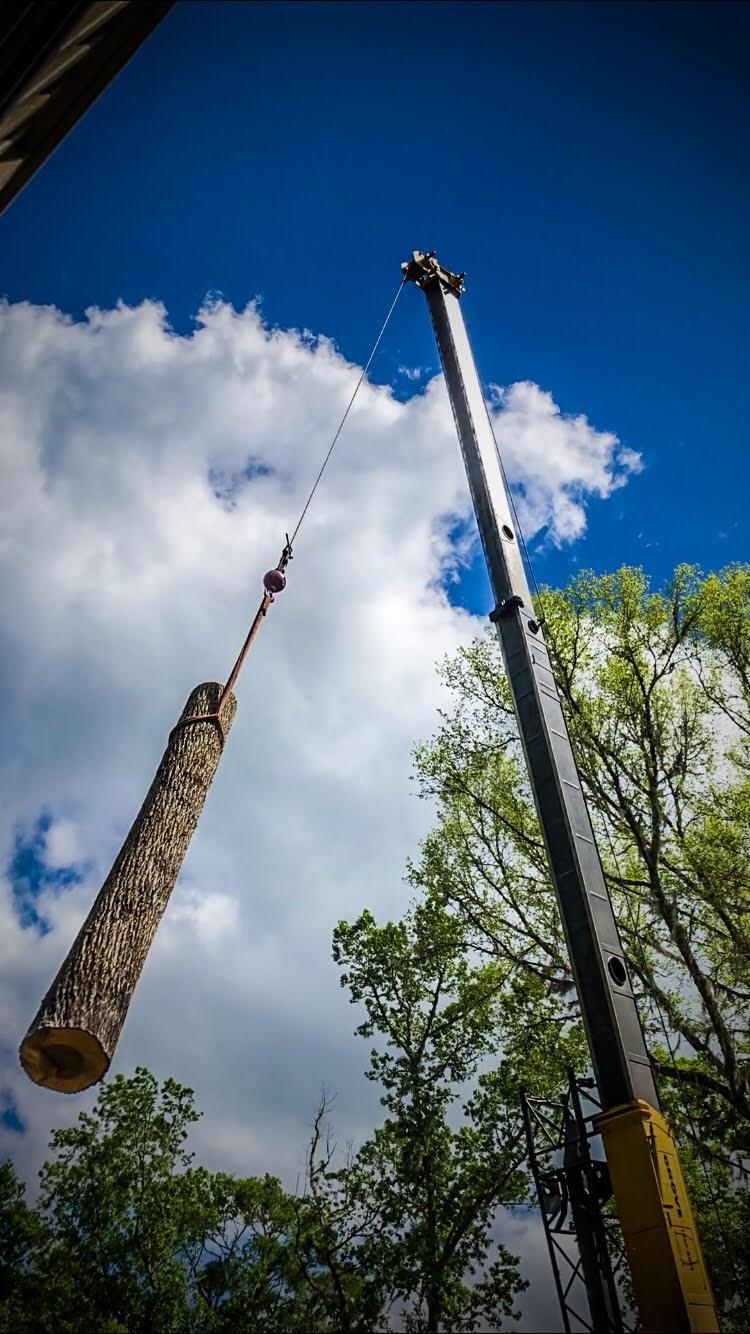 Crane picking a hickory tree log