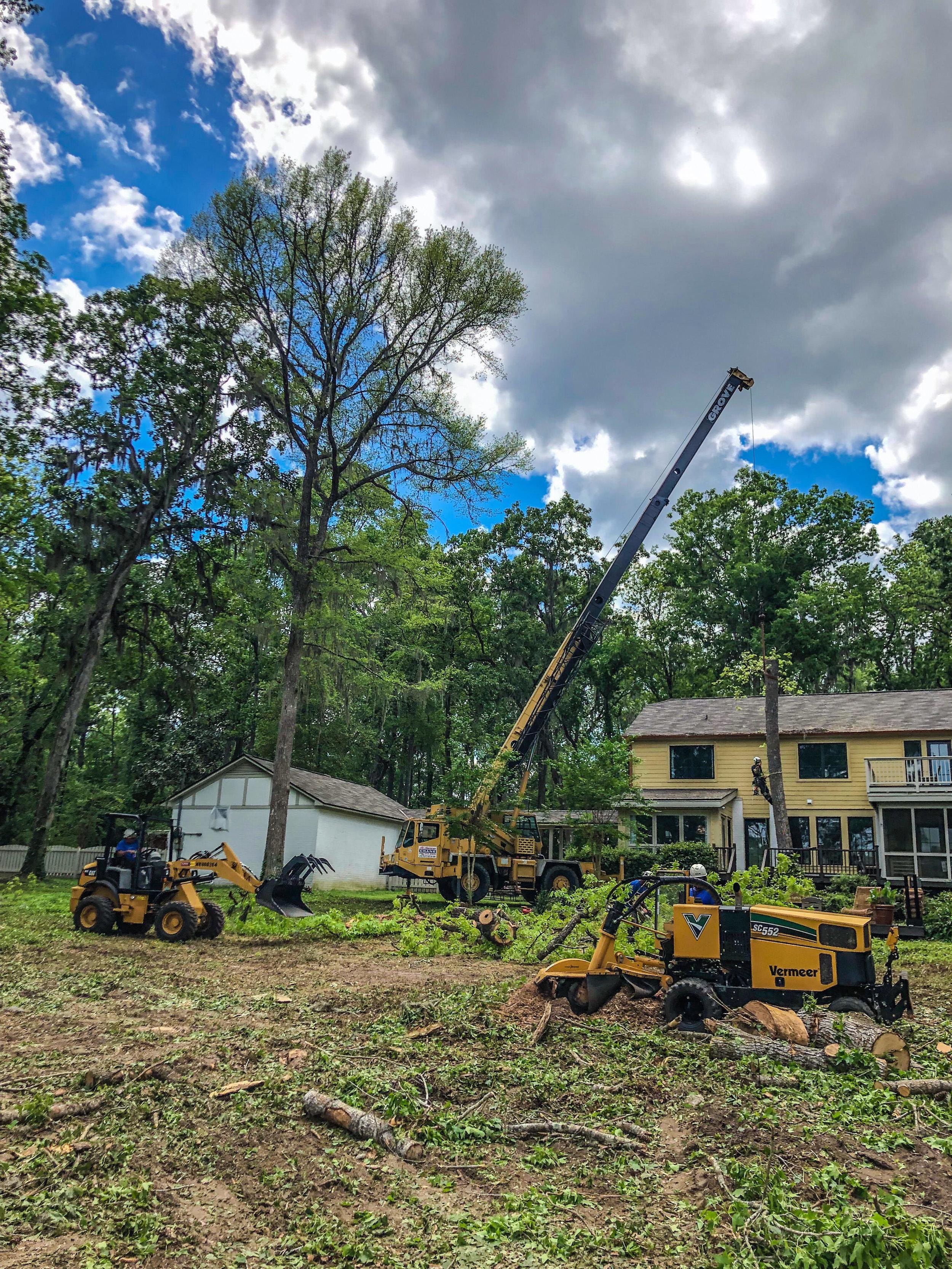 Tree Removal Job Site