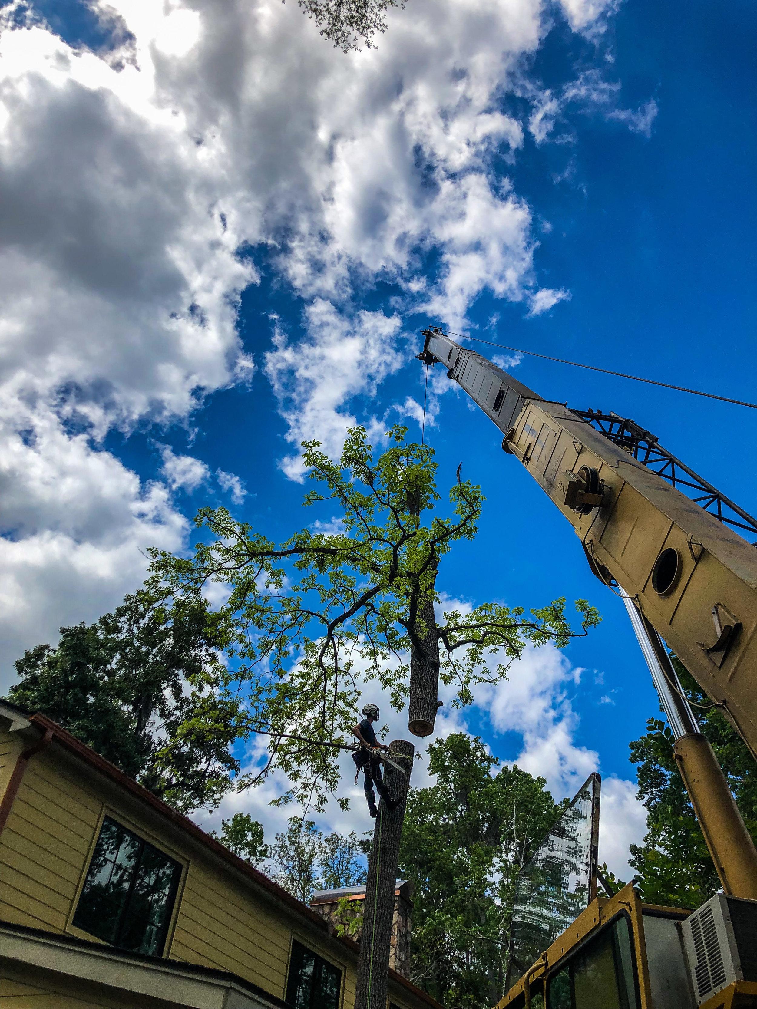Blue Sky Crane Lift Tree Top Off