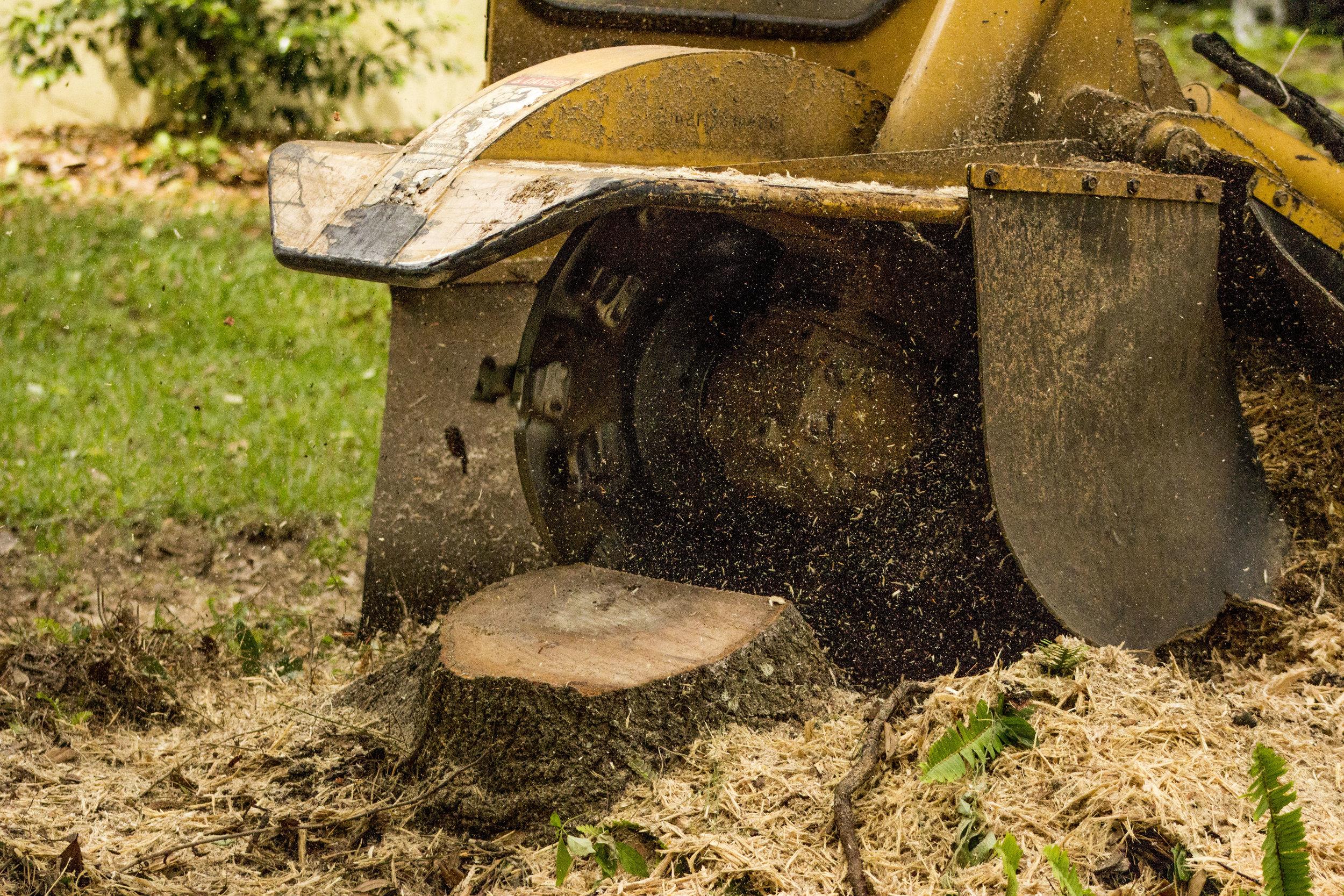 Stump Grinder removing a tree stump