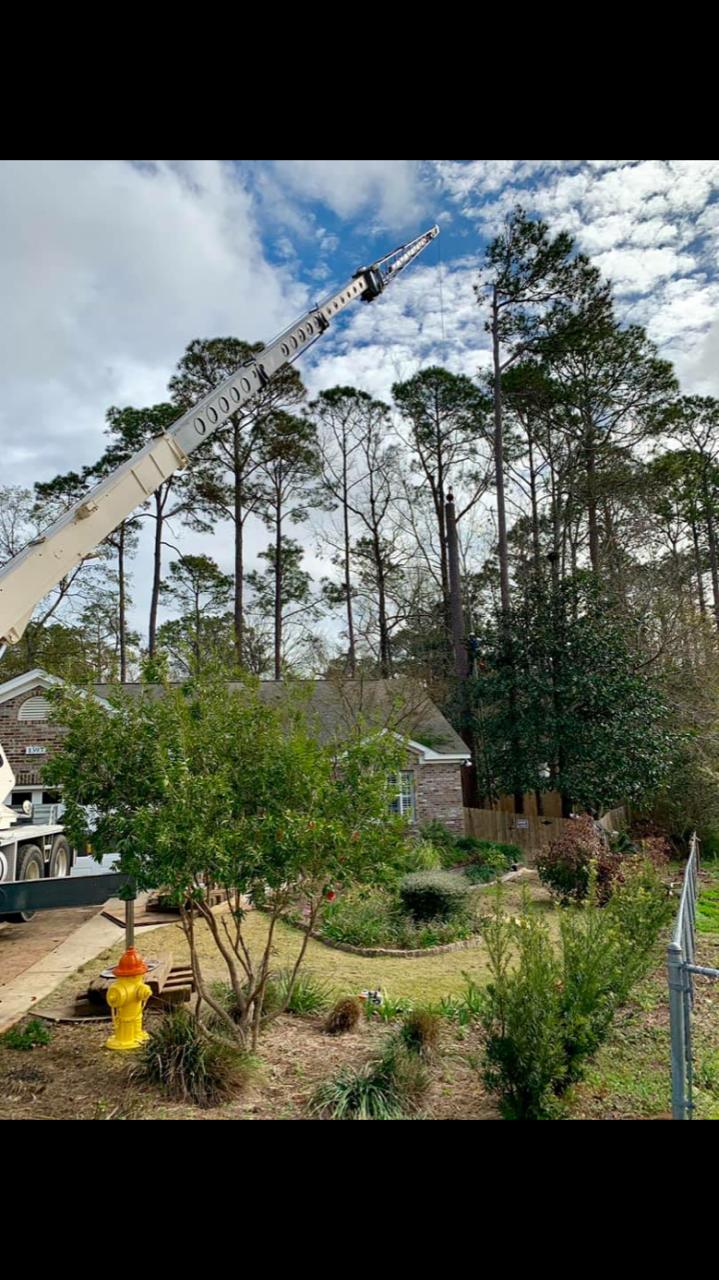 40 ton crane remove pine tree