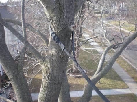 tree cabling 4.jpg