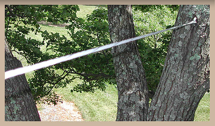 tree cabling wire 2.jpg