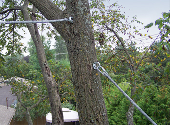 tree cabling wire 3.jpg