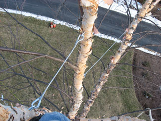 tree cabling wire 4.jpg