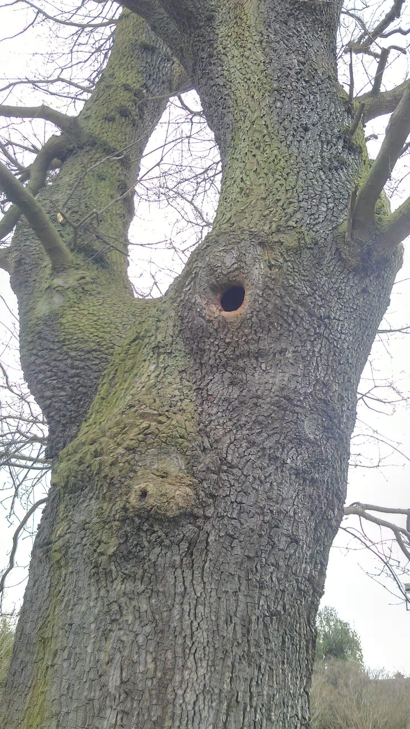 tree cavity 4.jpg