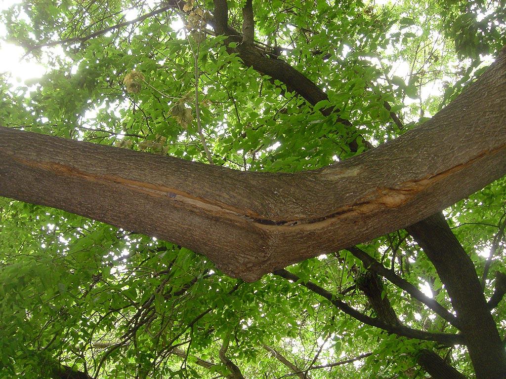 tree defect 2.jpg