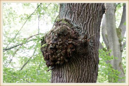 tree defect 3.jpg