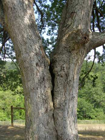 tree defect.jpg