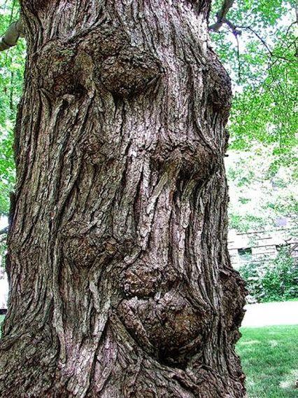 trees are like people 2.jpg