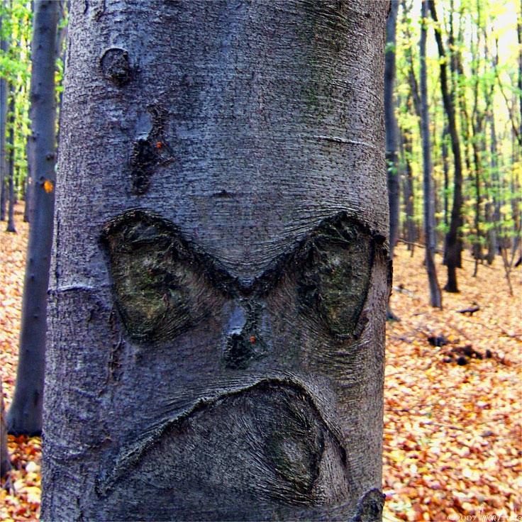 trees are like people 3.jpg