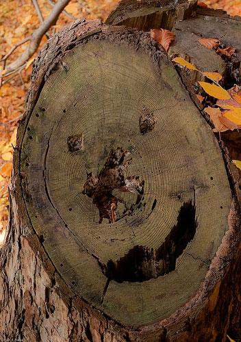 trees are like people 4.jpg
