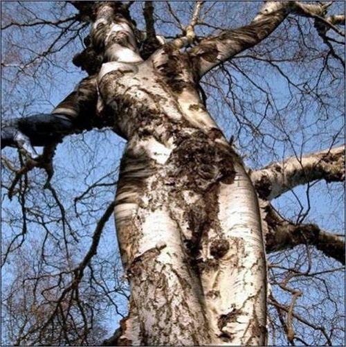 trees are like people.jpg
