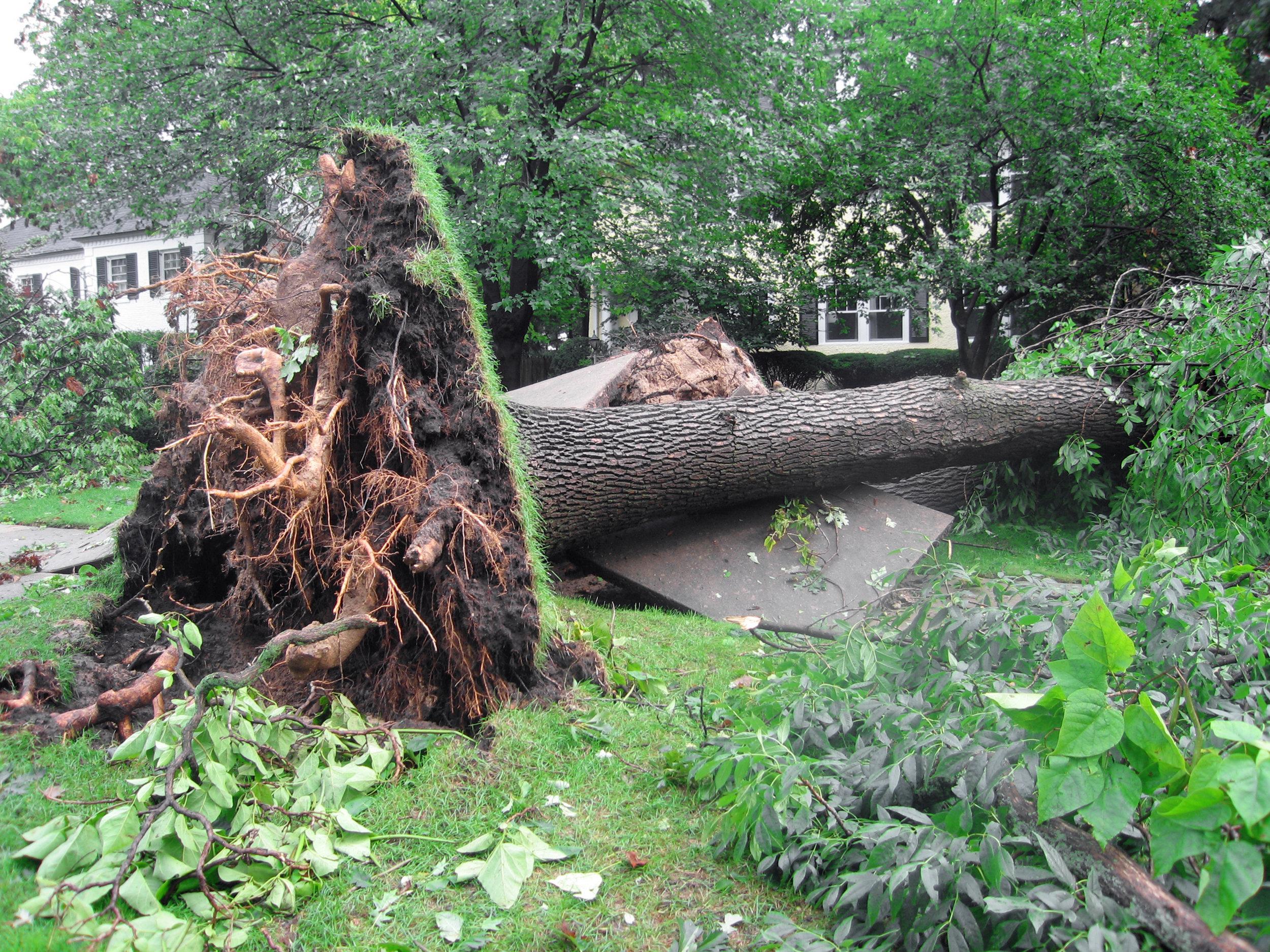 tree damage 31.jpg