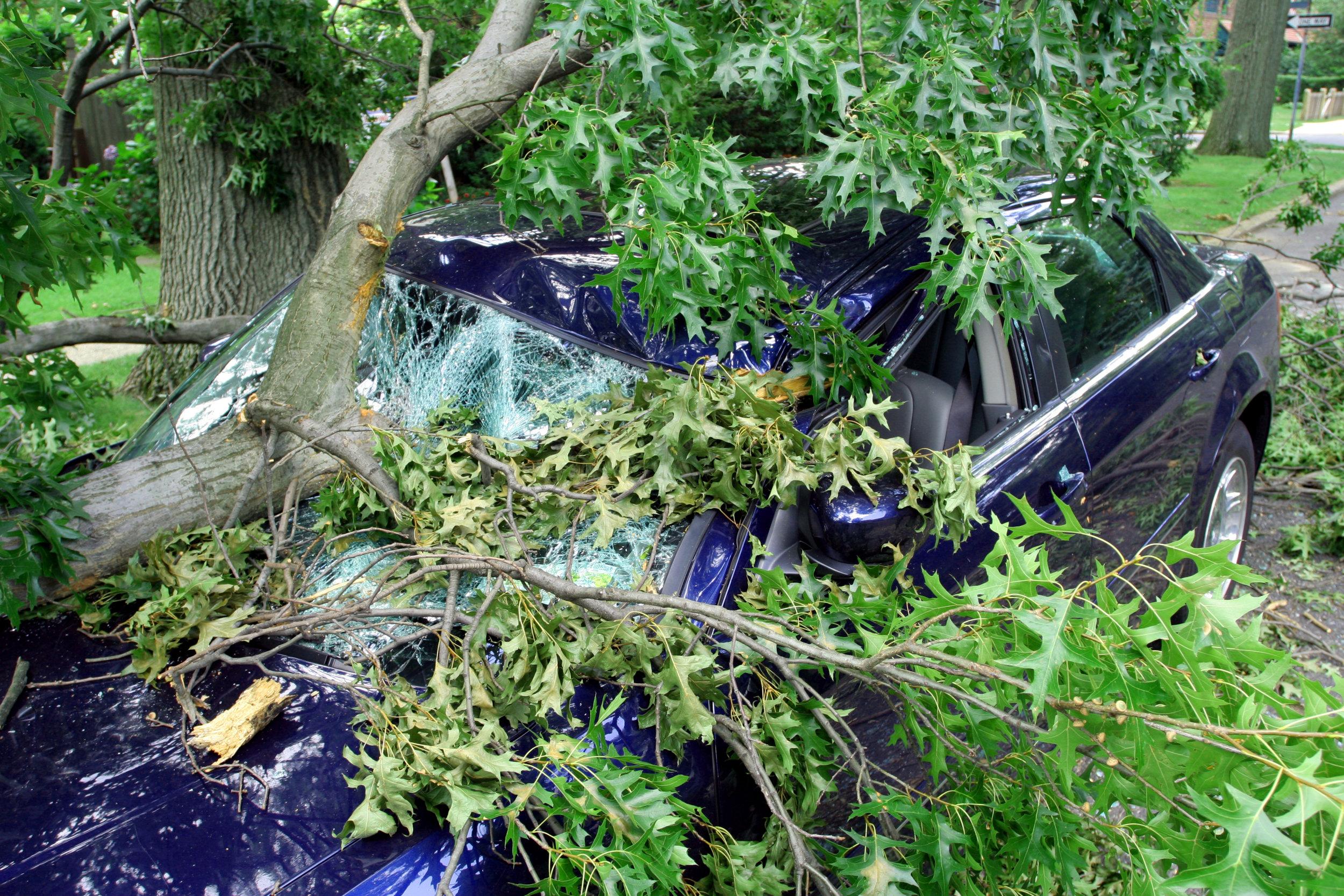 tree damage 33.jpg