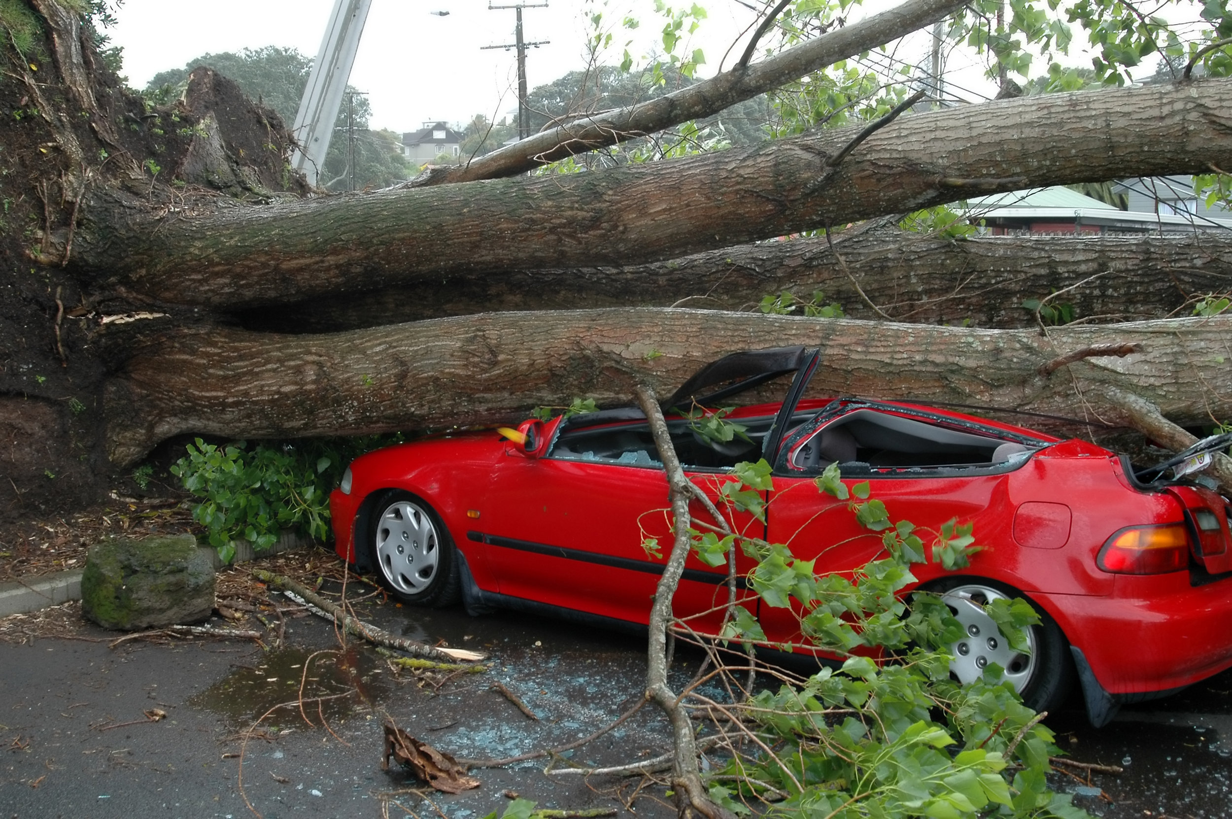 tree damage 34.jpg