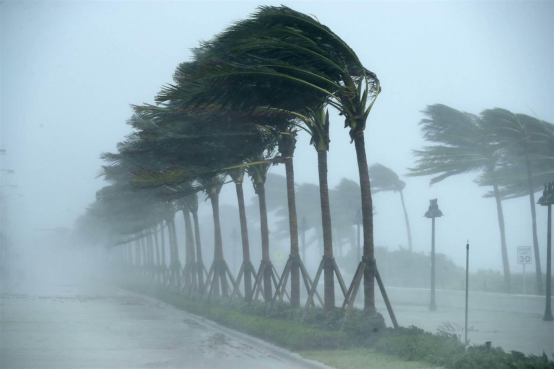 hurricane blown palms pic.jpg