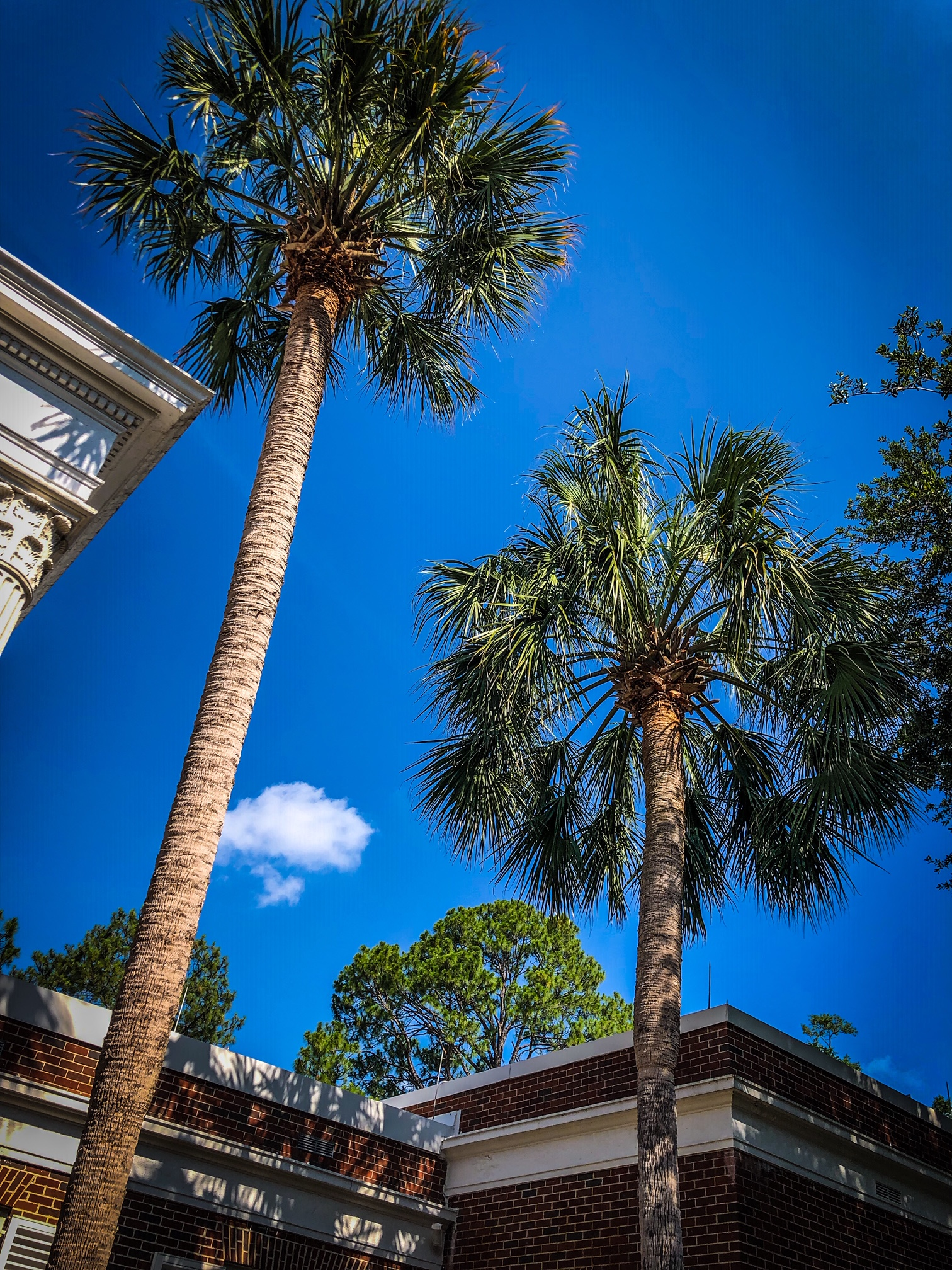 Governor's Mansion Palm Tree Pruning