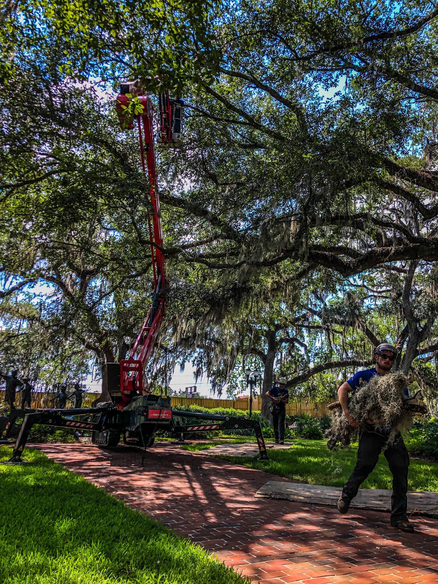 Track Lift Man Lift for Tight Access Tree Jobs