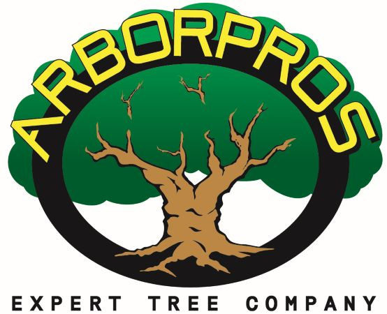 Arbor Pros Expert Tree Company Protects People & Property