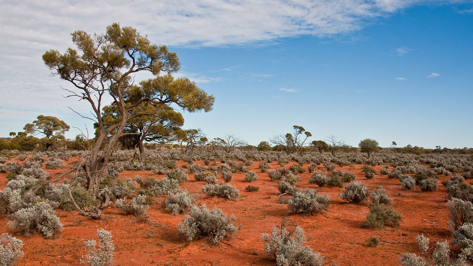 Mt Gunson Co-Cu - South Australia