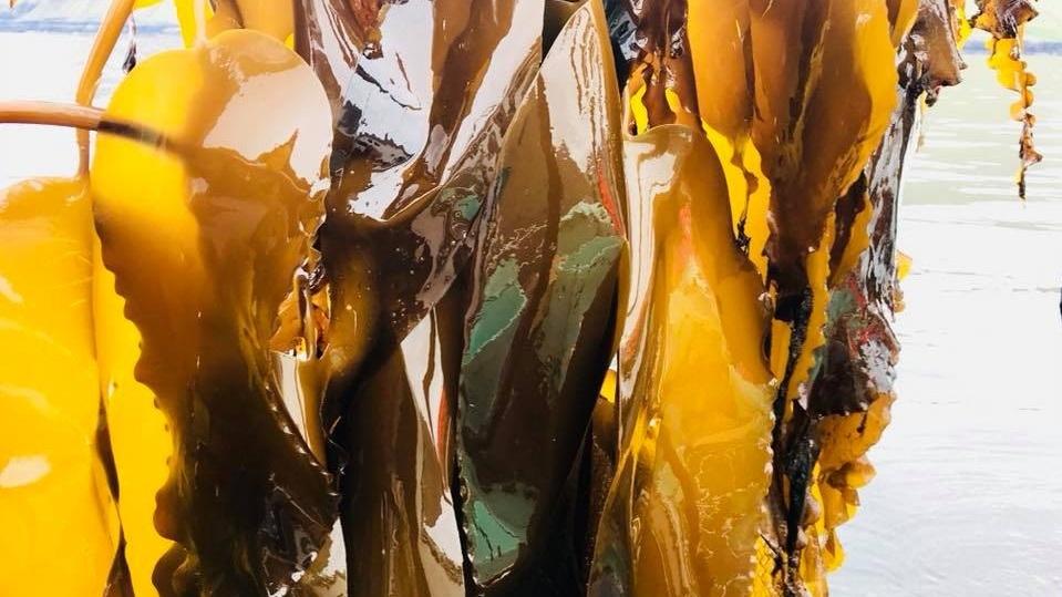 Seaweed_FB3.jpg