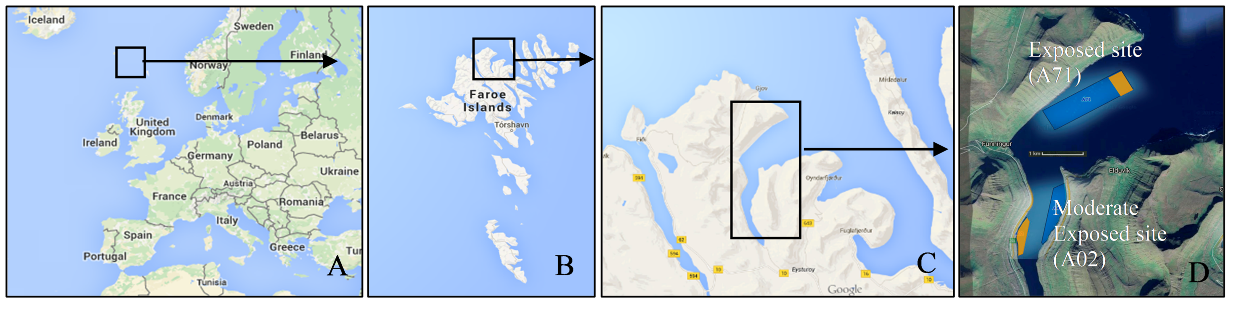 Above is a map showing Europe with a square around the Faroe Islands (A), the Faroe Islands with a square around the north of Eysturoy where the cultivation takes place (B), the fjord Funningsfjørður (C), and a satellite photo of the cultivation sites in Funningsfjørður (D). Orange coloured areas are the macroalgal cultivation sites and blue coloured areas are fish aquaculture. Source: ® Google maps (2018).