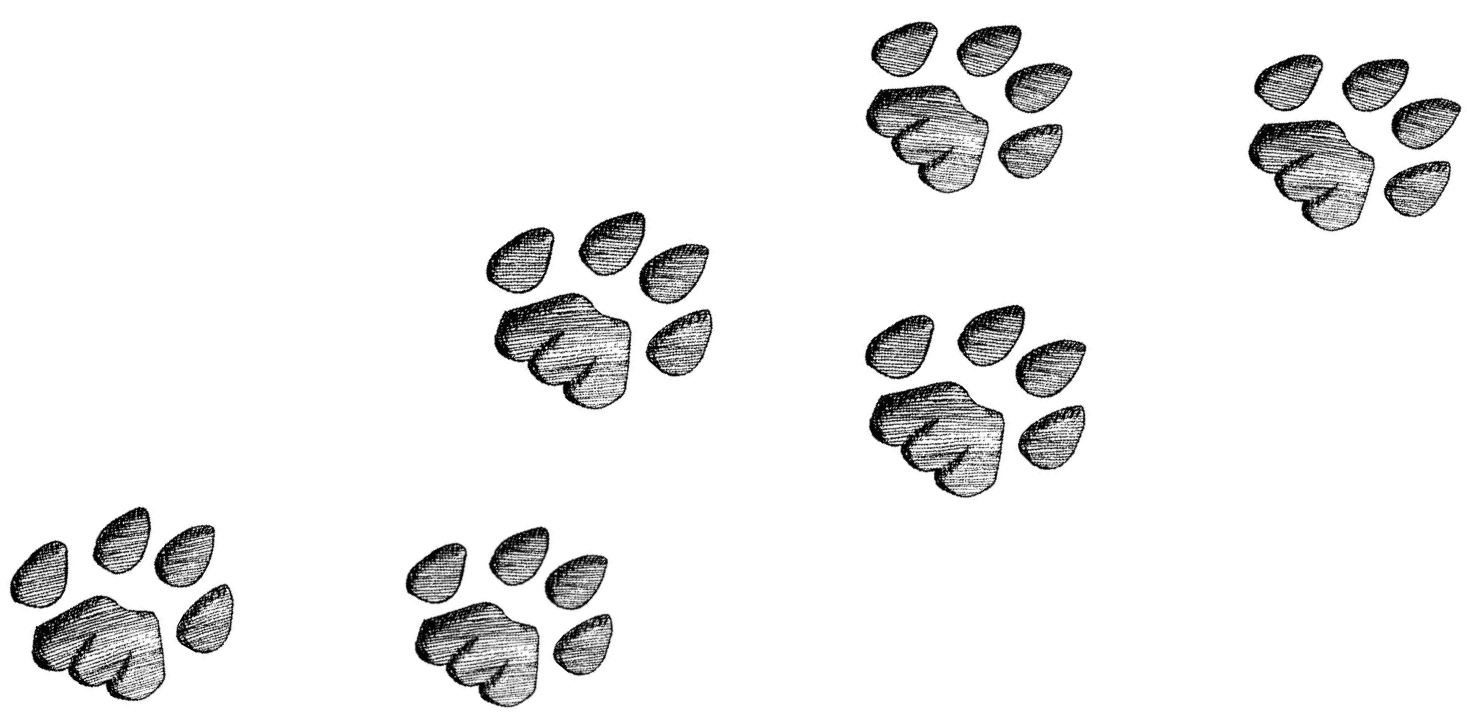 wild cat tracks.png