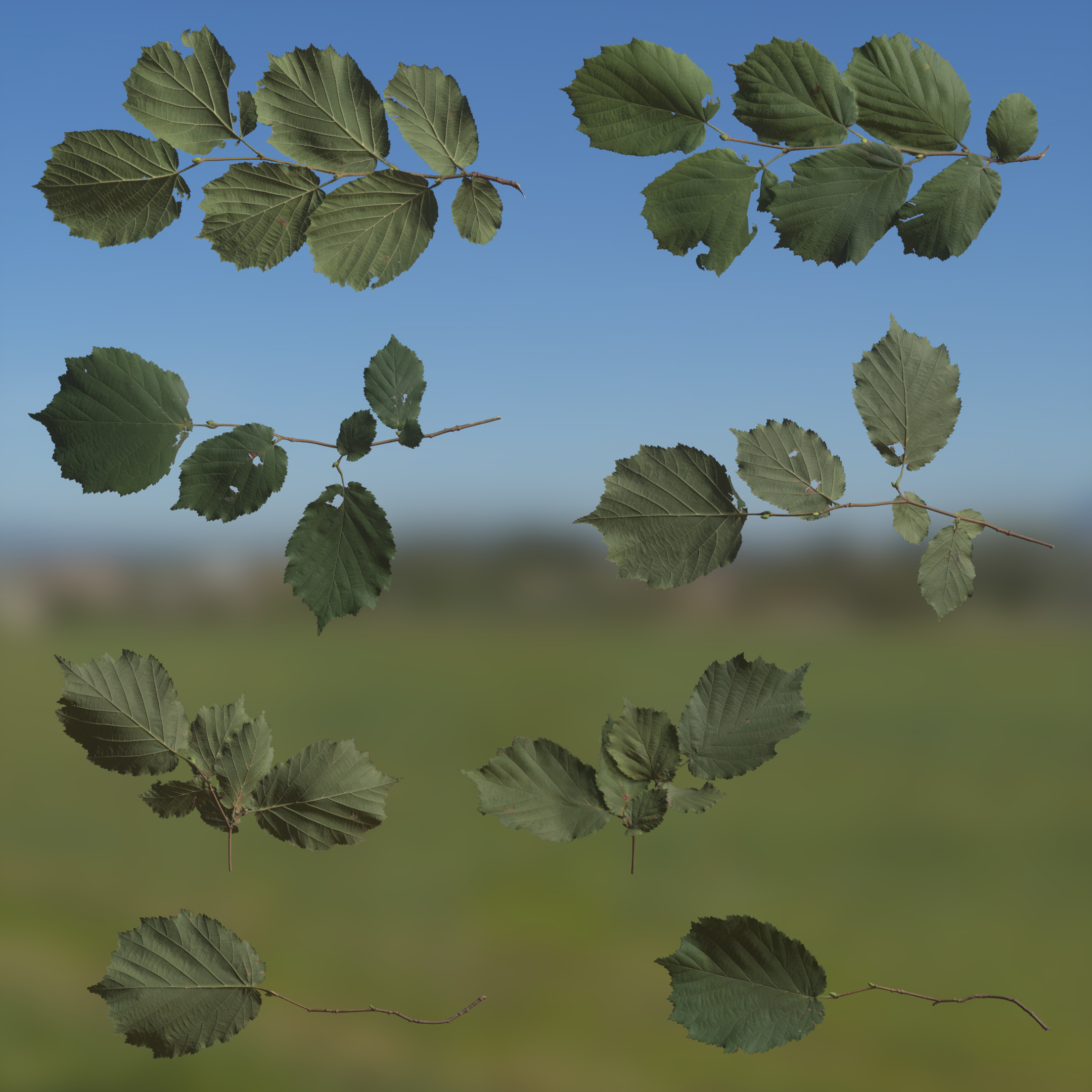 TexturesCom_3D_Scanned_Alder_Tree_Leaves_Atlas_03_header4.jpg