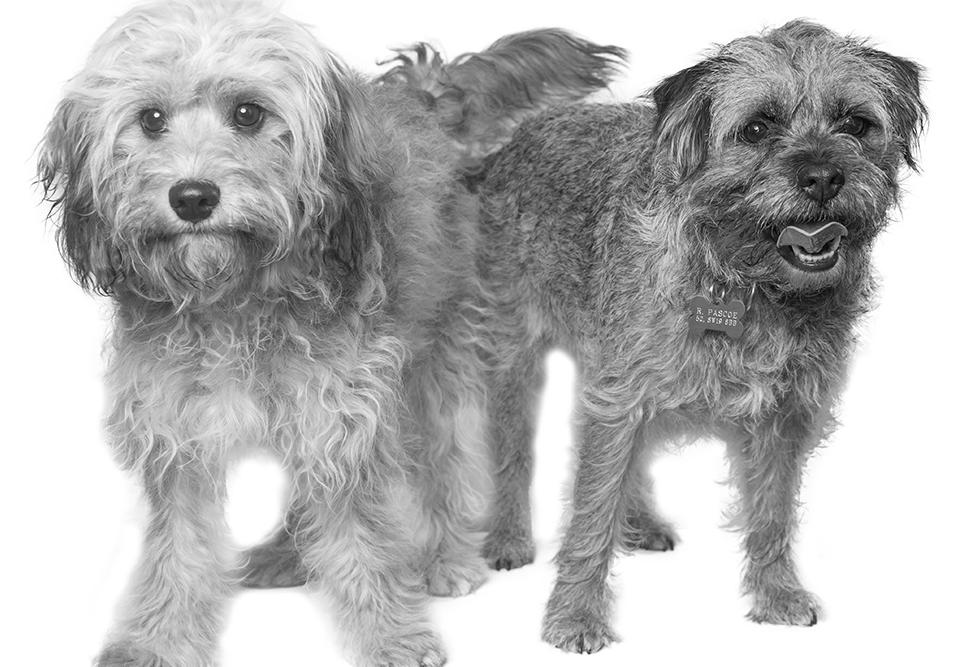 dogs-new-BW.jpg