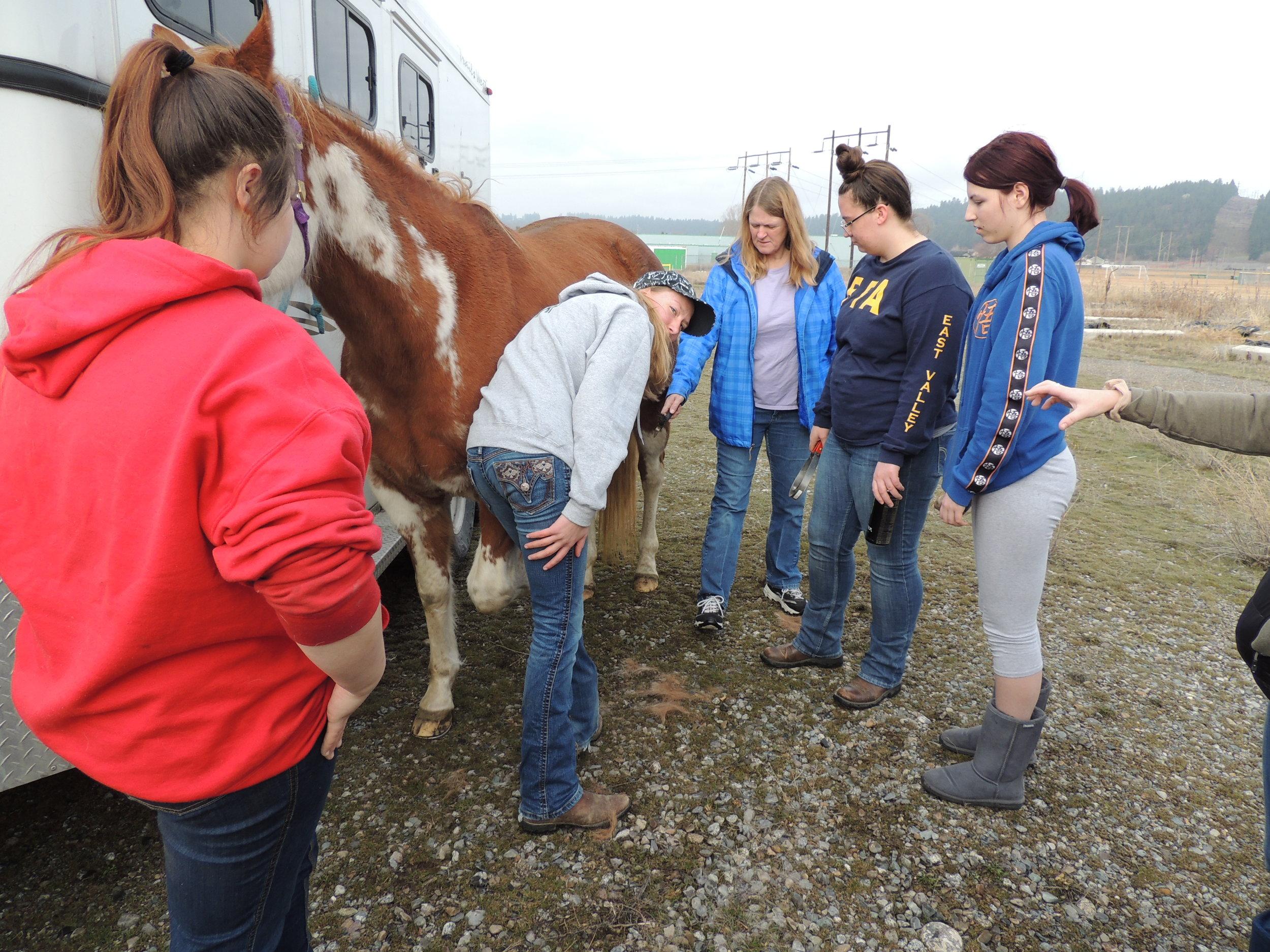 Horse Lab EVHS 1.jpg
