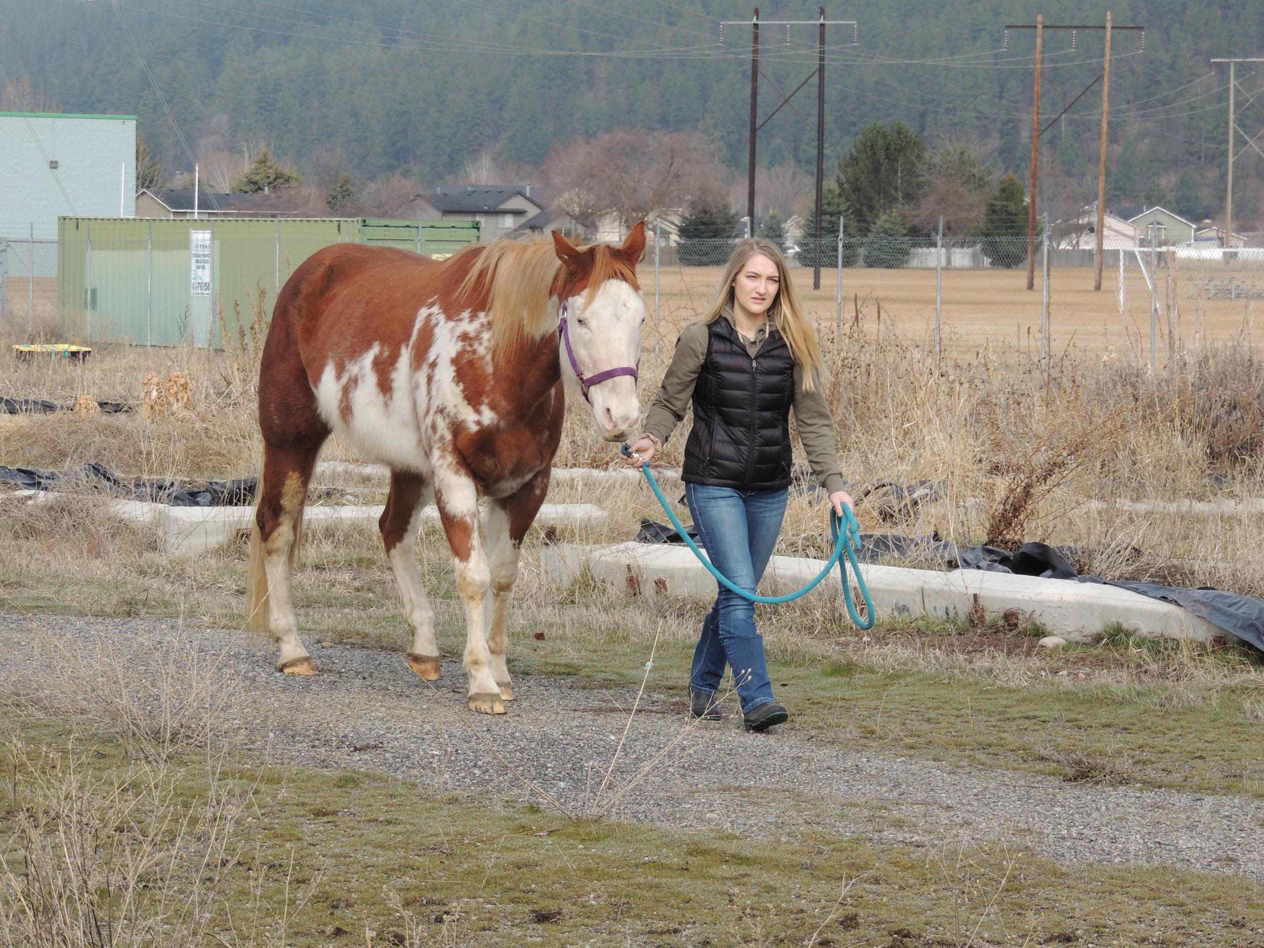 Horse Lab EVHS 2.jpg