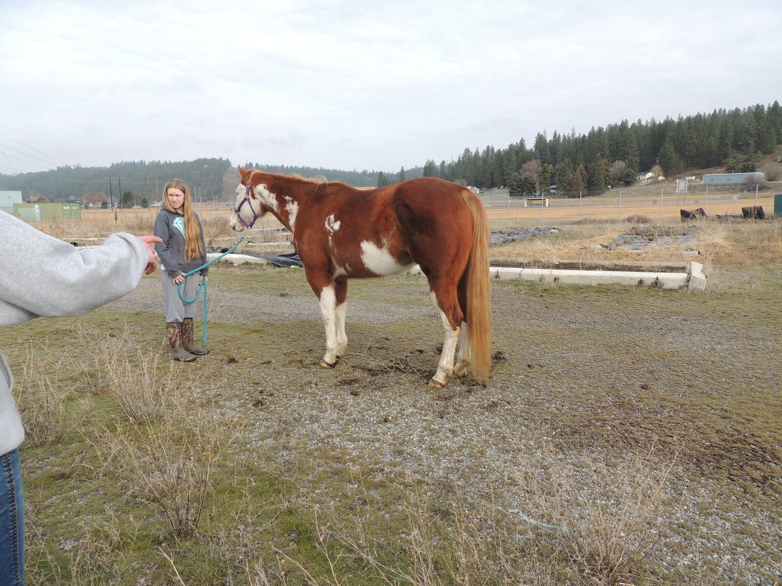 Horse Lab EVHS 7.jpg