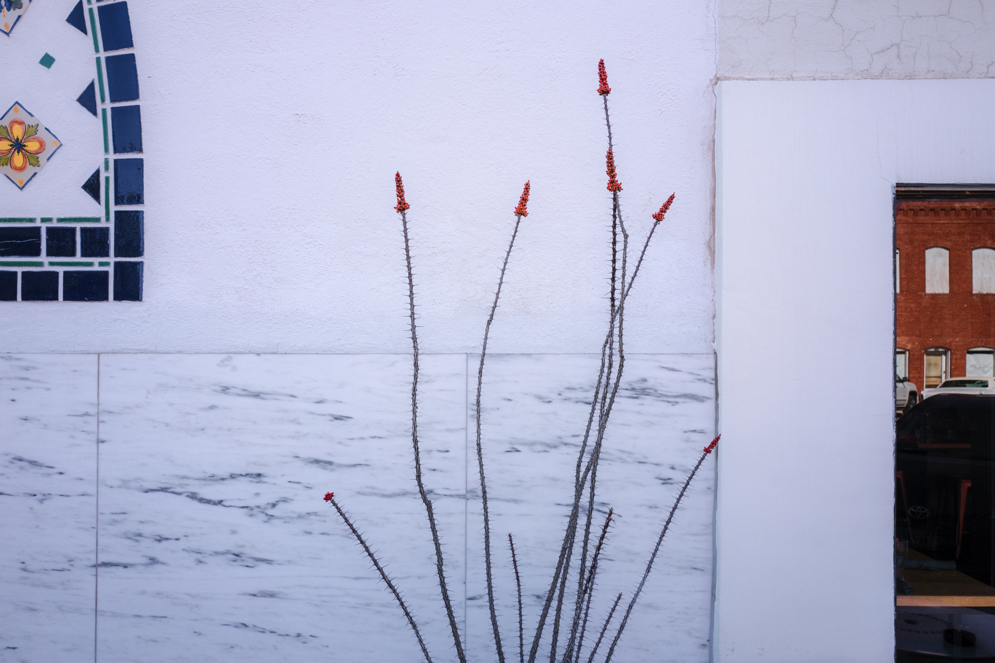 red_blooms_white_marfa.JPG