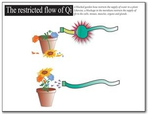 Think of Qi as water flowing through a garden hose, providing nourishment for flowers to grow and thrive. If the amount of water were restricted, eventually the flowers would wilt and wither.  Likewise, in order for a child to thrive and remain healthy, every part of his or her body requires an adequate and balanced supply of Qi flowing through it.