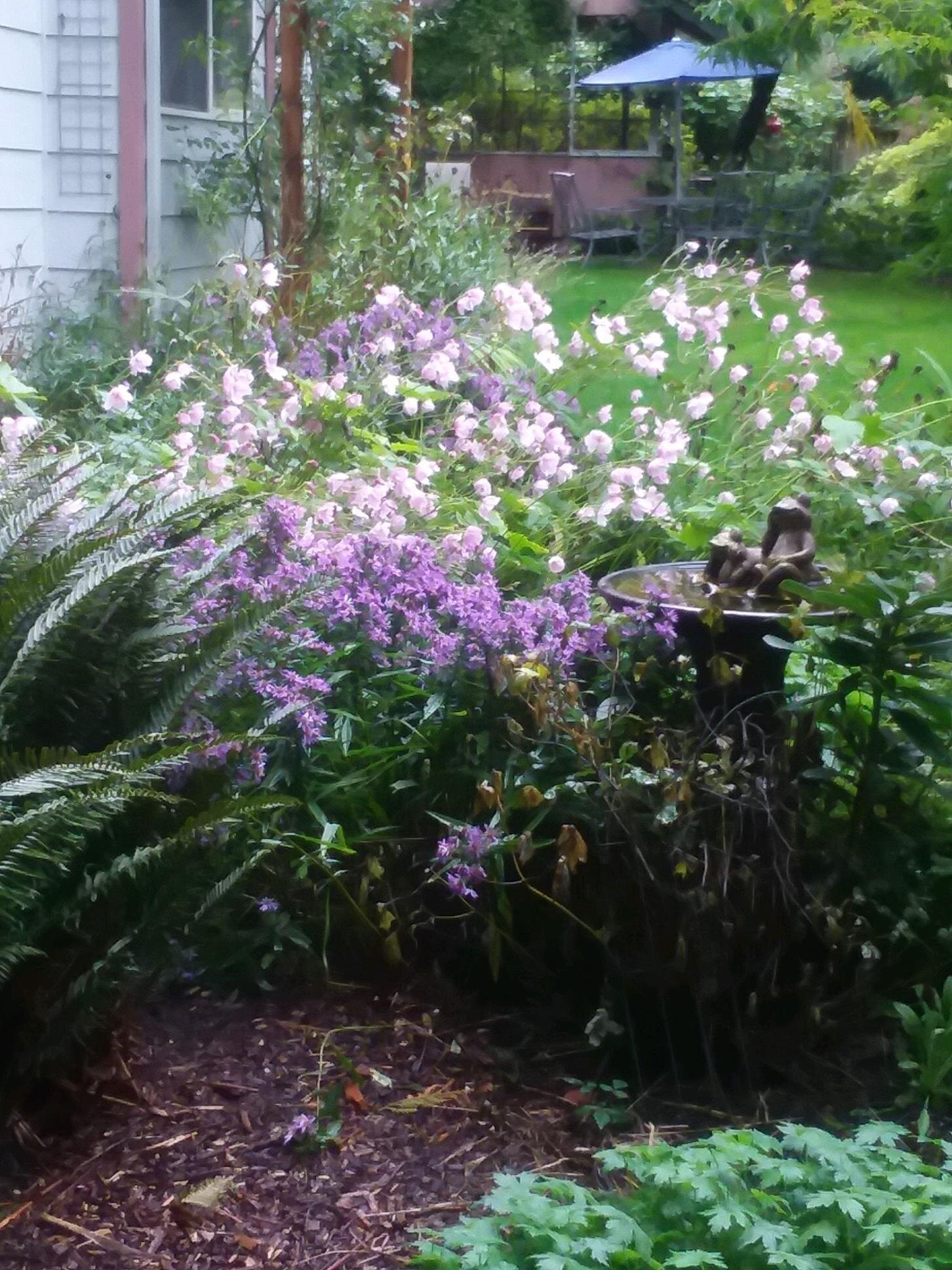 Purple Asters and Pink Anemones