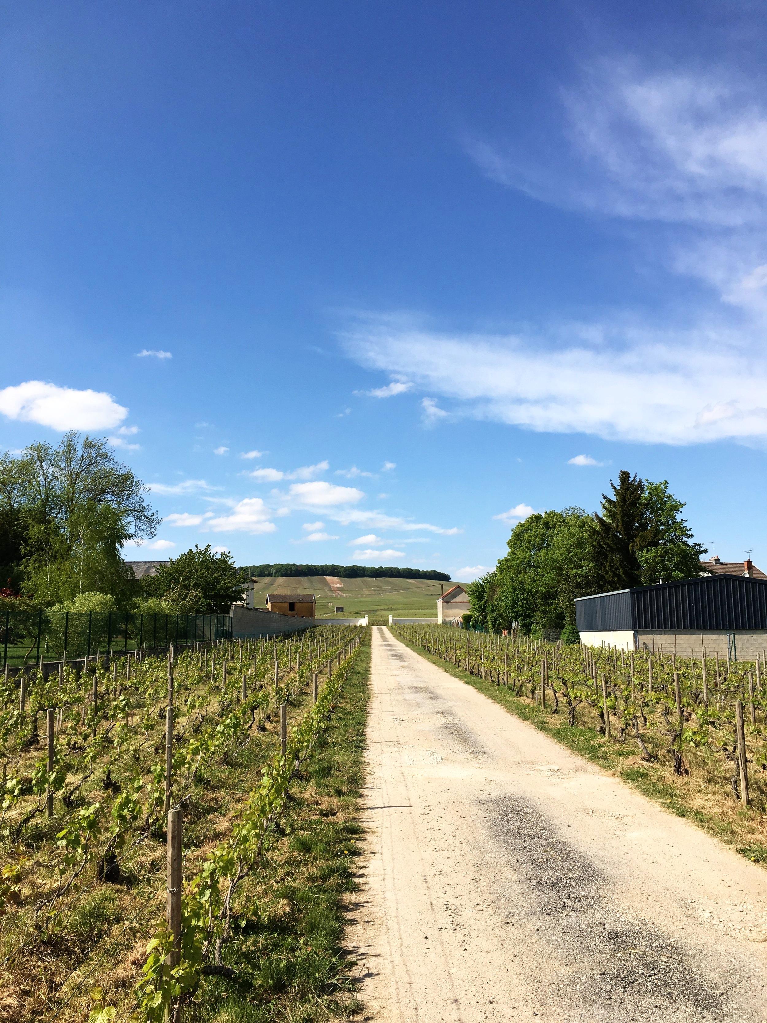 Clos de l'Abbaye - Champagne Doyard.   Crédit photo : Julie Carpentier