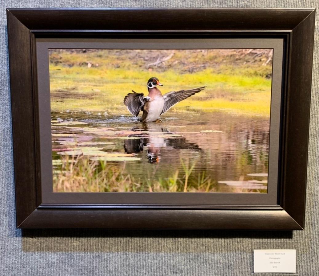 """Watercolor Wood Duck"", Julie Barrick"