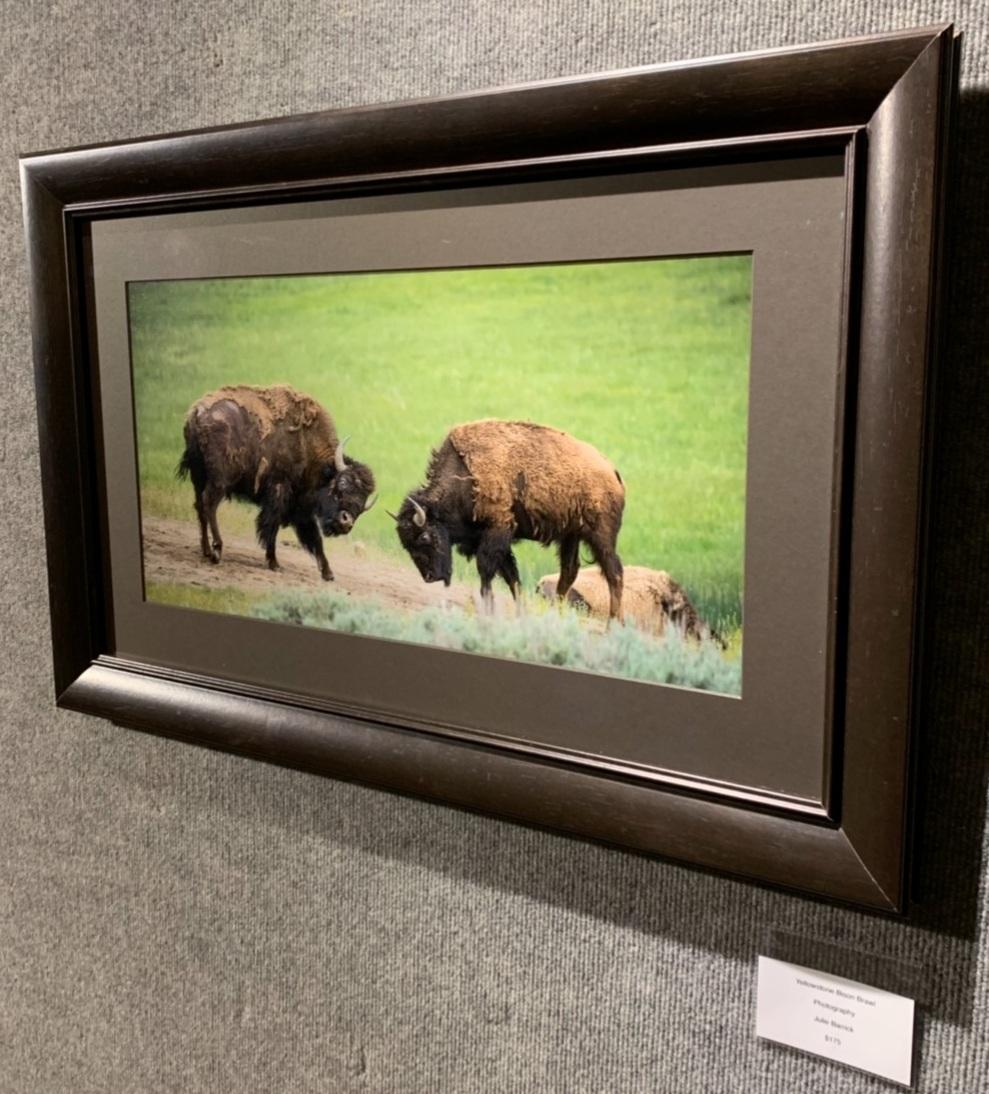 """Yellowstone Bison Brawl"", Julie Barrick"