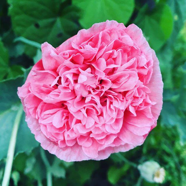 """""""Every flower must grow through dirt."""" - Laurie Jean Sennott"""